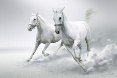 White Horses - Wall Mural & Photo Wallpaper - Photowall