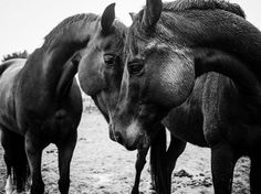 Touch Photo by Anneke Paterson -- National Geographic Your Shot