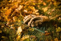 Energy tips for gardeners? Check out this fall landscaping checklist to prepare your lawn and garden for seasons ahead! Growing Herbs, Growing Vegetables, Palmers Garden Centre, Off The Grid News, Gardening Photography, Urban Farmer, Home Vegetable Garden, Survival Food, Survival Guide