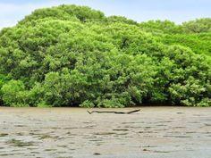 """Área Protegida Humedal Bahía de Panamá, según la Convención Relativa a los Humedales de Importancia Internacional (Convención RAMSAR)"""" firmada por Panamá."""