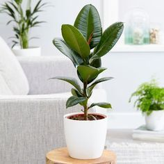 Pin On Air Purifying House Plants