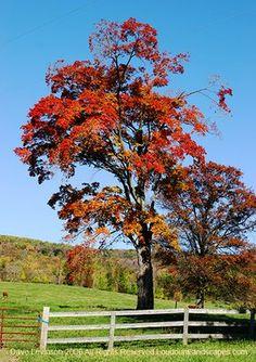 Pastoral: Sharing the Beauty of Loudoun County, Virginia Through Photography: October 2006