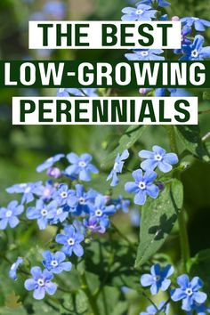 The Best Low-Growing Perennial Flowers Herbaceous Border, Herbaceous Perennials, Shade Perennials, Flowers Perennials, Planting Flowers, Edging Plants, Garden Edging, Garden Borders, Garden Plants