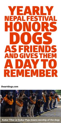 Yearly Nepal Festival Honors Dogs As Friends And Gives Them A Day To Remember! <3
