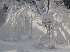 """""""snow 2011"""" by mylulabelles on Flickr - This photo was taken on January 26, 2011."""