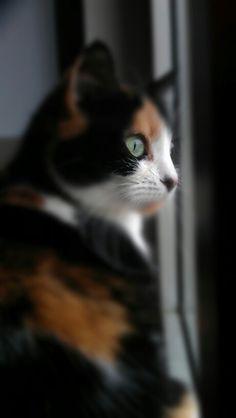 Arancio my cat