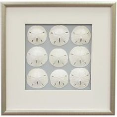 """Framed sand dollar wall decor.Product: Framed wall artConstruction Material: Wood, matte, glass and sea lifeColor: Burnished silver frameDimensions: 17.5"""" H x 17.5"""" WCleaning and Care: Wipe with dry cloth  idea for sand dollars and shell collections"""