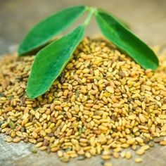 #Fenugreek has a long history of being considered as the finest #herb for #gastrointestinal health to enhance feminine #beauty to balance blood sugar levels and as an aid to the thought process. Its ability to balance hormone levels aids in treating PMS and #menopause and its antioxidants slow ageing. The plant is also employed against bronchitis fevers sore throats wounds swollen glands skin irritations ulcers and in the treatment of #cancer. Learn more here: http://buff.ly/2hTIb3K…