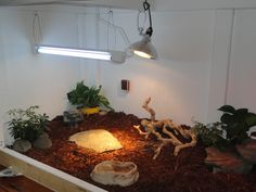 Start of new enclosure, for a Tegu... (from Lisa Foster at thetegu.com)