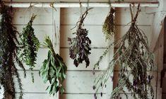 kinfolk plant - Google 검색