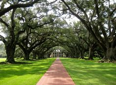 Oak Alley Plantation. The trees were amazing.