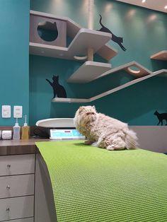 Pet Shop, Amor Animal, Animal Medicine, Vet Med, Hospital Design, Vet Clinics, Clinic Design, Cat Room, Space Cat