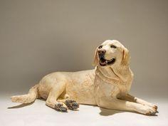 44 Best Labrador Retriever Garden Statues images in 2019