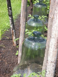 Glass Garden Cloches. The old ones are getting harder to find, and thus can be a…