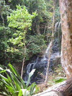 Durian Perangin Falls #places #nature #earth #beaches #ocean #adventure #travel #trekking #map #photographs #herbs #hiking #images #sightseeing #mountains #infrastructure #buildings #water #canada #MountainTuesday #TravelTuesday #Langkawi #sevenwells #Lighthouse