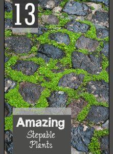 13+Amazing+Stepable+Plants