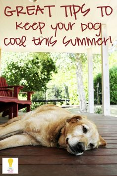 Tips for keeping your dog cool this summer #pets #dogs #summer http://tipsaholic.com/5-ways-keep-dog-cool-summer/