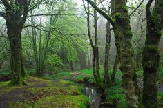 Woods near Burrator reservoir #Dartmoor #Devon