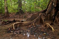 Slow moving creek in Iwokrama, Guyana by Andrew Snyder