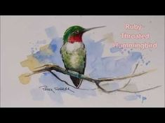 How to paint a Ruby-Throated Hummingbird in Watercolour. Easy to follow and fun to paint. - YouTube