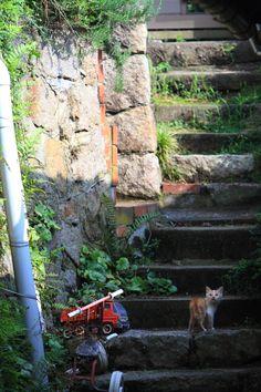 Wild cat of Onomichi city