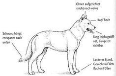 Der entspannte Hund Horses, Puppies, Fantasy, Calming, Dogs, Animals, Cheer Up, Dog Things, Dog Training School