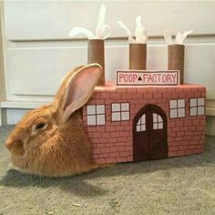 The reality of rabbit ownership Big Bunny, Cute Baby Bunnies, Funny Bunnies, Cute Baby Animals, Funny Animals, Bunny Meme, Funny Rabbit, Pet Rabbit, Rabbit Jokes