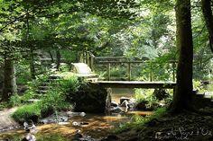 La vallée du Cousin entre #Avallon et #Vézelay - #Yonne #HauteBourgogne Cousin, Plants, Auvergne, Bon Voyage, Landscapes, Planters, Plant, Planting, Planets