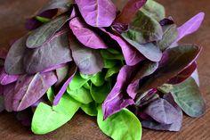 Stevia, Dan, Succulents, Plants, Food, Essen, Succulent Plants, Meals, Plant