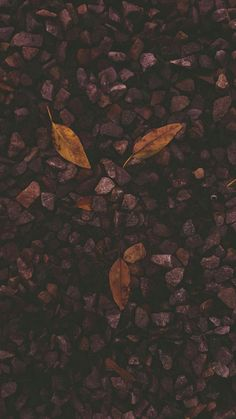 Fall is Coming ©2106 Sarai Ulibarri Photography Santa Fe, NM
