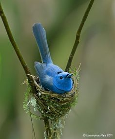 368 Best Strictly For The Birds Images On Pinterest Beautiful