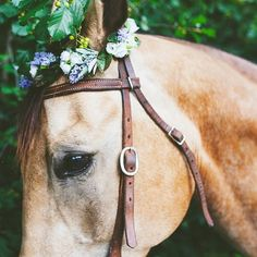 flower crowns aren't just for people ...