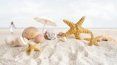 Starfish and shells and sand, oh my Beach Wallpaper, Images Wallpaper, Mobile Wallpaper, Summer Wallpaper, Widescreen Wallpaper, Cellphone Wallpaper, Desktop Wallpapers, Fb Cover Photos, Timeline Photos