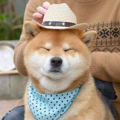Meet Ryuji, The Most Expressive Shiba From Japan Shiba Inu, Animals And Pets, Baby Animals, Funny Animals, Akita, Funny Animal Pictures, Dog Pictures, Animal Pics, I Love Dogs