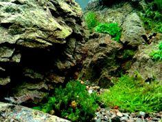 Nature Design, A-BI Aquatics.s photo