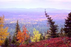 Autumn colours on Kouervaara Hill, Kuusamo, Lapland, Finland. Lappland, Helsinki, Places Around The World, Around The Worlds, Future Days, Lapland Finland, Scandinavian Countries, Autum Leaves, City Landscape