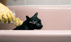 bath time black kitty