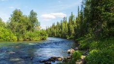 Национальный парк «Югыд ва», Республика Коми. Фото ООО «Газпром трансгаз Ухта»