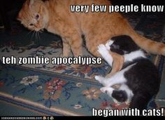 very few peeple know teh zombie apocalypse began with cats!