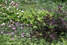Floral lawn: Floral lawn at Avondale Park, London  |  pinned by www.vinlandvalleynursery.com