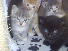 #kitty' cats  Like,Repin,Share, Thanks!