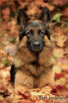 WHAT a beautiful dog!                                                                                                                                                                                 More