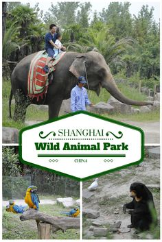 Planning a visit to Shanghai, China? Here're some tips, if you want to visit Shanghai Wild Animal Park. China Travel, Us Travel, Visit Shanghai, Wild Animal Park, Family Affair, Vacations, Elephant, Asia, Spaces