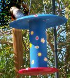 Pringles Can Bird Feeder Craft - great idea! Paper towel roll & two paper / styrofoam paints