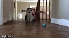 I love cat gifs and dog gifs. Funny Cats, Cute Cats, all the time. Cat Gif, Funny Posts, Hardwood Floors, Dog Cat, Cats, Play, Funny Messages, Wood Floor Tiles, Wood Flooring