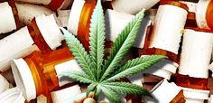 New Study Shows Legal Weed Far Better at Stopping Opioid Overdose Epidemic Than Drug War via @worldtruthtv