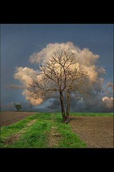 Wolken-boompje!!