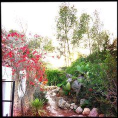 Inkhouse Ibiza - Verdant Pathway