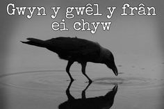 24 beautiful Welsh proverbs and sayings that show the language at its finest - Wales Online Welsh Sayings, Welsh Words, Welsh Phrases, Flirting Quotes For Her, Flirting Texts, Flirting Humor, Welsh Symbols, Welsh Tattoo, Learn Welsh