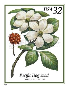 Zoom: Pacific Dogwood Postage Stamp Art | Great Big Canvas